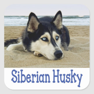 Love Siberian Husky Puppy Dog Greeting Stickers