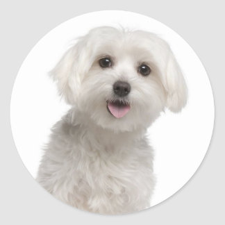 Love White Maltese Puppy Dog Stickers Seal