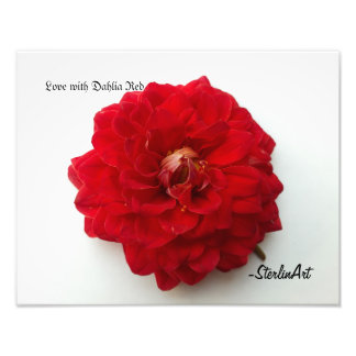 Love with Dahlia Red Photo Print