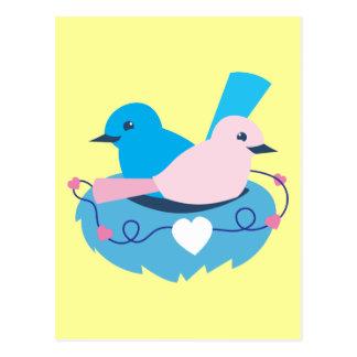 Love wrens lovebirds nest postcards