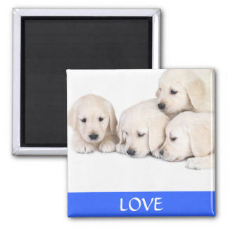 Love Yellow Labrador Retreiver  Puppies Magnet