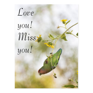 Love you,miss you lovebird postcard