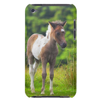 Loveable Standing Dartmoor Pony Foal iPod Touch Case-Mate Case