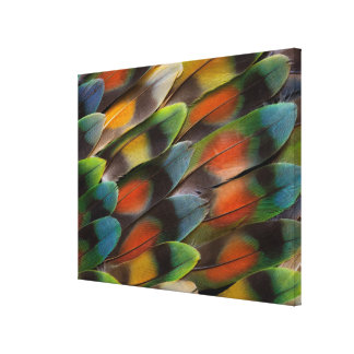 Lovebird Feather Pattern Canvas Print