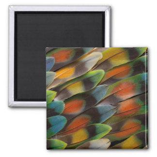 Lovebird Feather Pattern Magnet