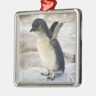 Lovely Baby Penguin, Premium Square Ornament