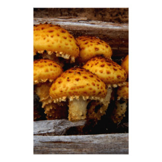 Lovely Bunch of Wild Mushrooms Personalized Stationery
