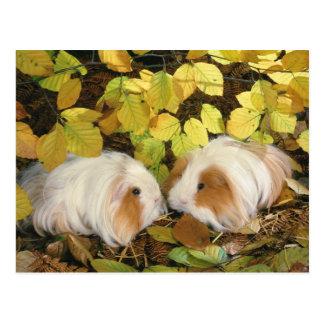 Lovely Bunnies 69 Postcard