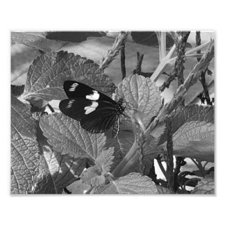 Lovely Butterfly on Leaf in Black and White Photo Art