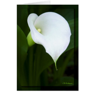 Lovely calla lily card