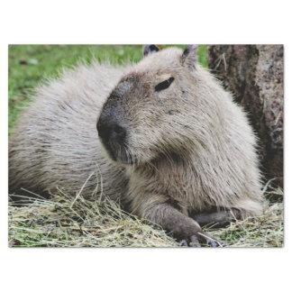Lovely capybara tissue paper