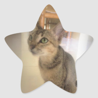 lovely cat star sticker