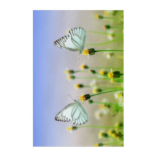 Lovely Couple of Butterfly in Spring Wall Panel Acrylic Print