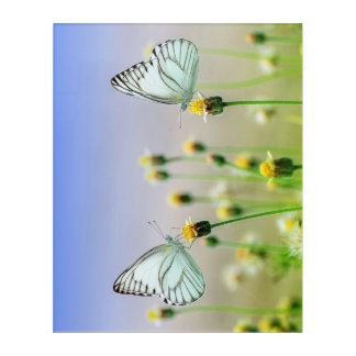 Lovely Couple of Butterfly in Spring Wall Panel Acrylic Wall Art