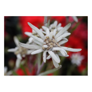 Lovely Edelweiss Leontopodium nivale Pack Of Chubby Business Cards