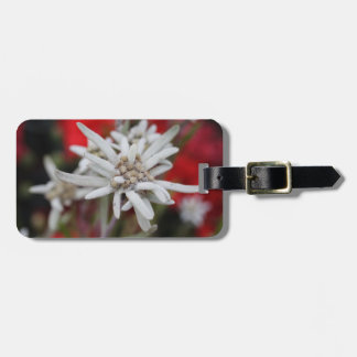 Lovely Edelweiss Leontopodium nivale Luggage Tag