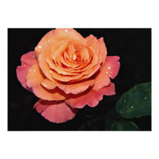 Lovely Grandiflora Rose Sundowner Personalized Invite