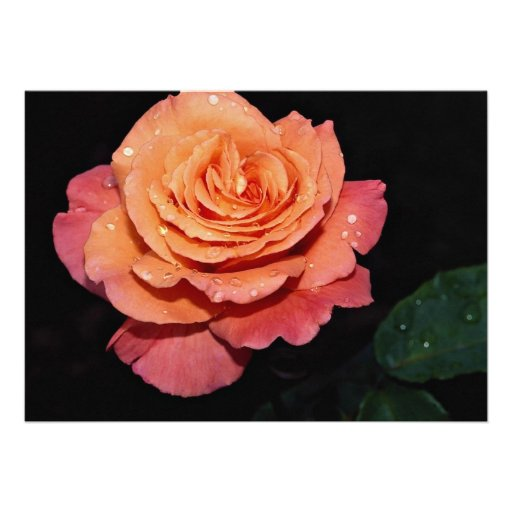 Lovely Grandiflora Rose 'Sundowner' Personalized Invite