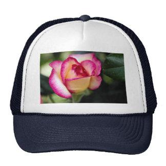 Lovely Hybrid Tea Rose Mesh Hat