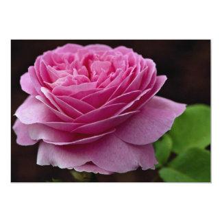 Lovely Hybrid Tea Rose 'Heirloom' 13 Cm X 18 Cm Invitation Card