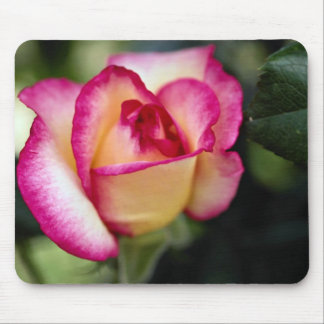 Lovely Hybrid Tea Rose Mouse Pads