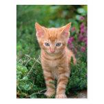 Lovely Kitten 7 Post Cards