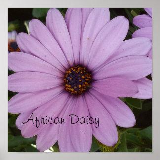 lovely lavender Flower Poster