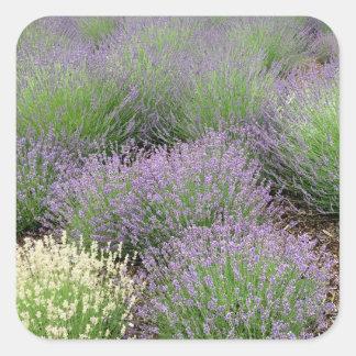 Lovely Lavender Square Sticker