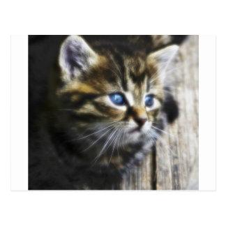 Lovely Little Cat Postcard