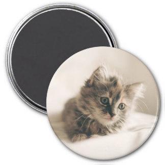Lovely Little Kitten Cat Kitty 7.5 Cm Round Magnet