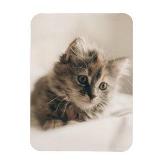 Lovely Little Kitten Cat Kitty Rectangular Photo Magnet