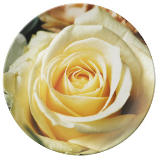 Lovely Off White Cream Rose Porcelain Plates