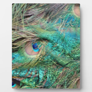 Lovely Peacock Feathers Beautiful Eyes Display Plaques