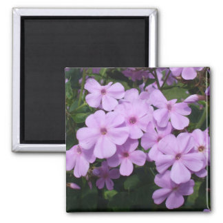 Lovely Pink Flowers Magnet