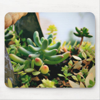 Lovely Potted Plants Mouse Pad