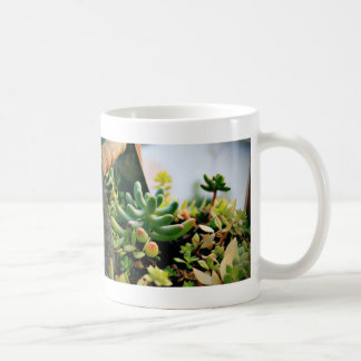 Lovely Potted Plants Coffee Mug