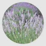 Lovely Provence French Lavender Classic Round Sticker