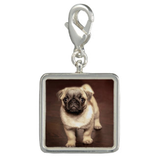 Lovely Puppy Pug, Dog, Pet, Animal