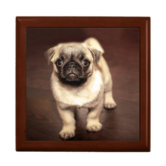 Lovely Puppy Pug, Dog, Pet, Animal Gift Box