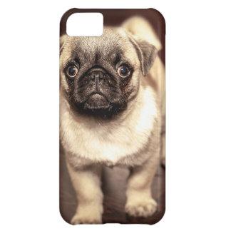 Lovely Puppy Pug, Dog, Pet, Animal iPhone 5C Case