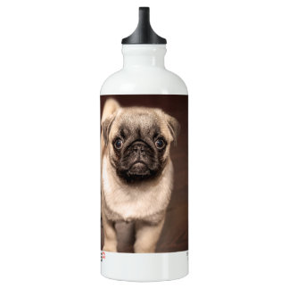 Lovely Puppy Pug, Dog, Pet, Animal Water Bottle