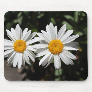 Lovely pure white daisy flowers. mouse pad