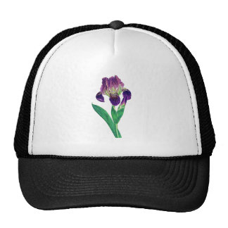 Lovely Purple Dutch Iris Cap