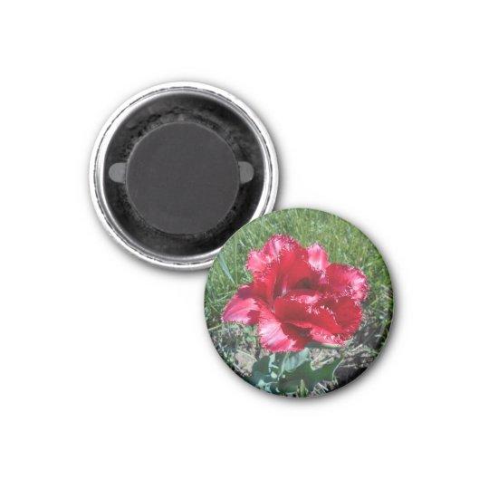 Lovely Red Tulip 3 Cm Round Magnet