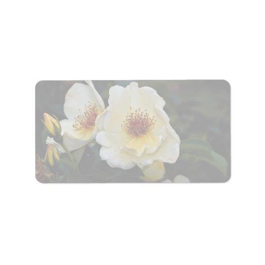 Lovely Shrub Rose 'Golden Wings' Label