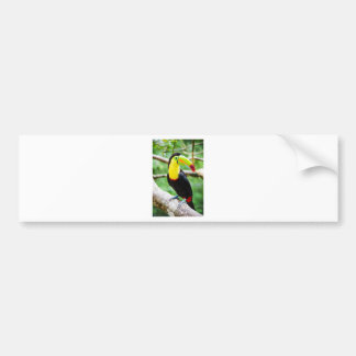 Lovely Toucan Bumper Sticker
