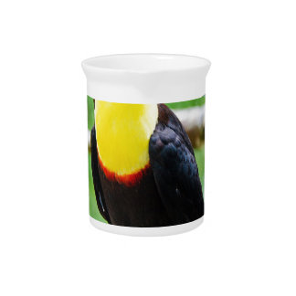 Lovely Toucan Pitcher