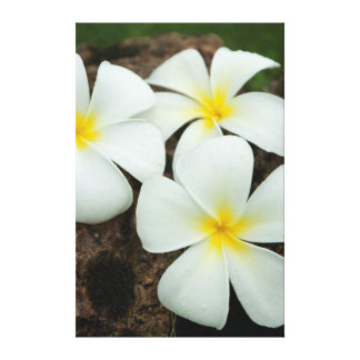 Lovely Tropical Blossoms In The South Pacific Stretched Canvas Prints