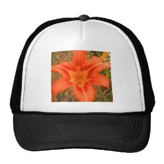lovely tropical flower cap