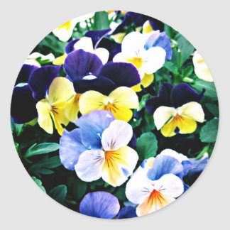 Lovely Viola Classic Round Sticker